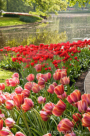 Tulip gardens and lake
