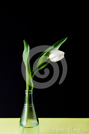 Free Tulip In Glass Vase On Black And Yellow Background Royalty Free Stock Photos - 67597078