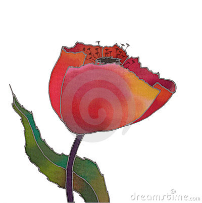 Tulip isolated