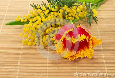 Tulip, mimosa on the bamboo cloth