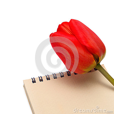Tulip with paper notepad