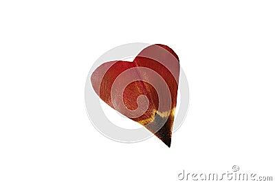 Tulip s petal as heart
