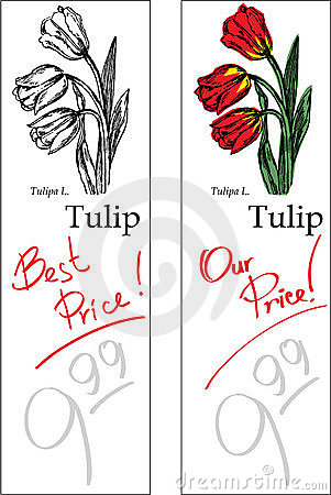 Tulip - Two Price Tags