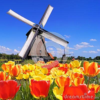 Tulipanes y molinoes de viento holandeses