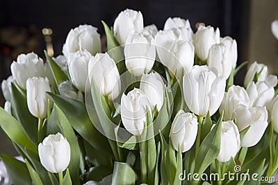 Tulipe Blanche Floraison Tulipe Maison Retraite Champfleuri