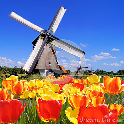 Tulipes et moulins à vent hollandais