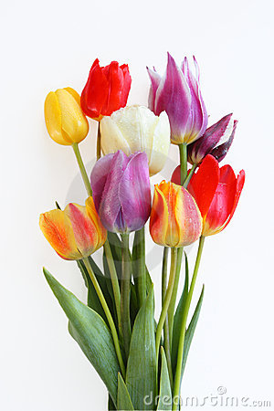 Free Tulips Royalty Free Stock Photo - 14579225