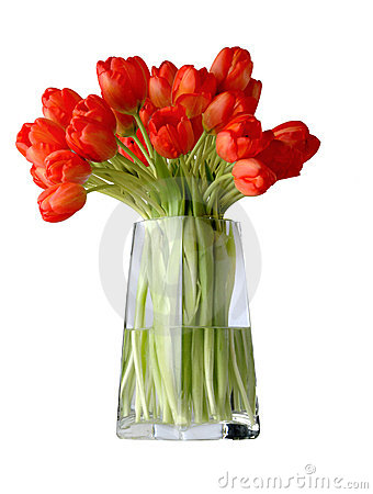 Free Tulips Royalty Free Stock Photography - 1590557