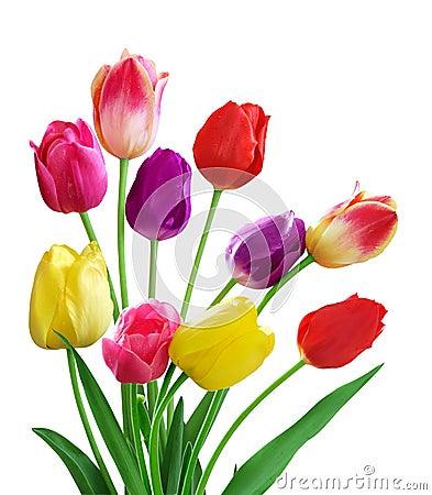 Free Tulips Royalty Free Stock Photos - 5199478