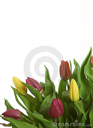 Free Tulips Stock Photography - 646682