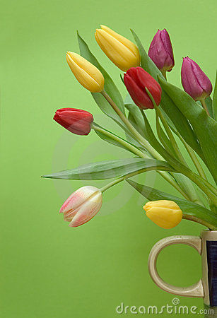 Free Tulips Stock Photos - 655913
