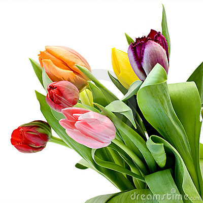 Free Tulips Royalty Free Stock Photography - 8948357