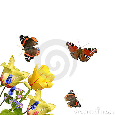 Free Tulips And Butterflies Royalty Free Stock Photos - 3942608