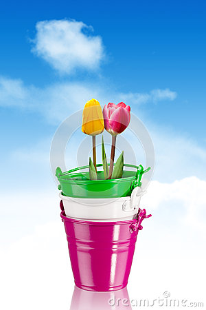 Tulips in colorful buckets - clipping path