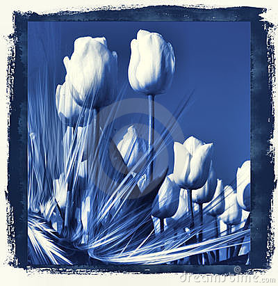 Tulips in delft s Blue