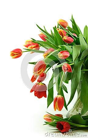 Free Tulips Flowers Bouquet Stock Photos - 1990613