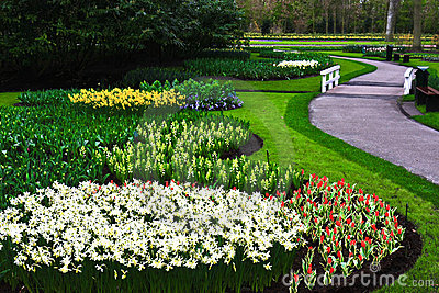 Tulips Flowers Garden, Lisse