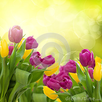 Free Tulips Flowers On Colorful Bokeh Background Royalty Free Stock Photos - 37674298