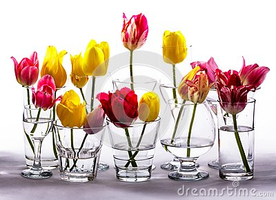 Tulips in glasses
