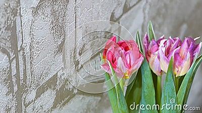 Tulips near wall stock video footage