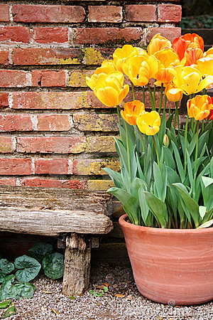 Tulips and old wall