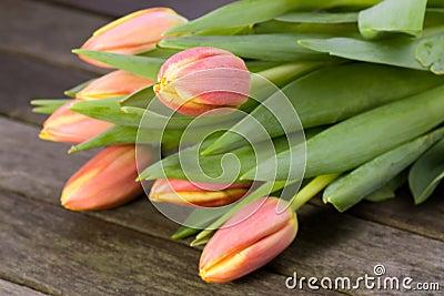 Tulips in pastel