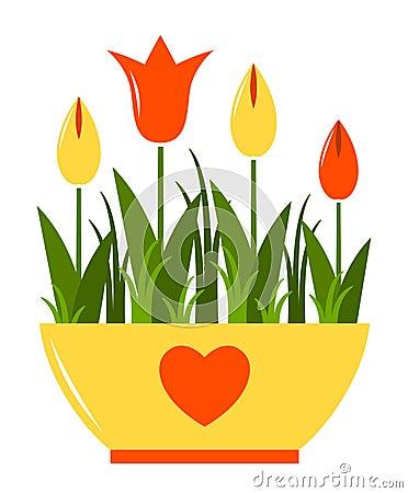 Tulips in pot