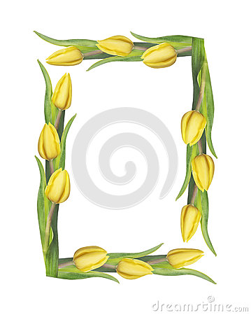 Free Tulips Square Frame, Isolated On White Royalty Free Stock Photo - 48377465