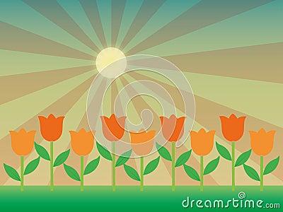 Sunlight on tulips