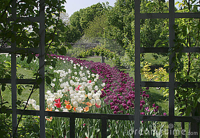 Tulips And Trellis, Pastoral Scene