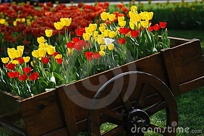 Tulips in a trolley