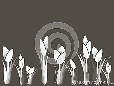 Tulips variation