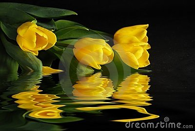Tulips on water