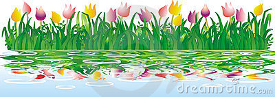 Tulips with water reflection