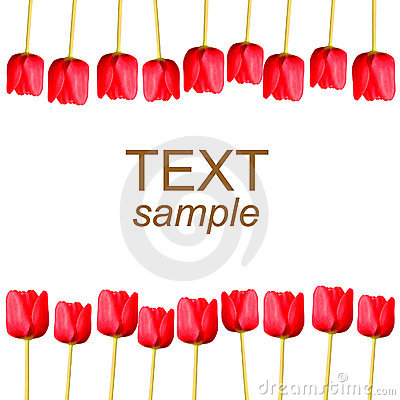 Tulips on white with sample text