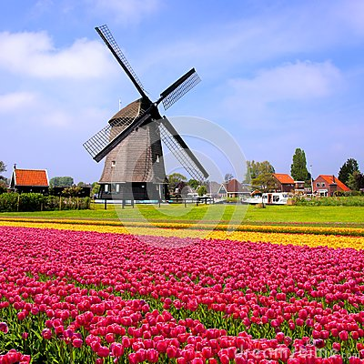 Free Tulips With Dutch Windmills, Netherlands Royalty Free Stock Photography - 51512227