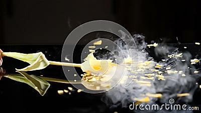 Tulpe eingefroren beim Brechen des flüssigen Stickstoffes Frosen-Blumenzertrümmern in eine Tabelle Langsames motionon Symbol von  stock video footage