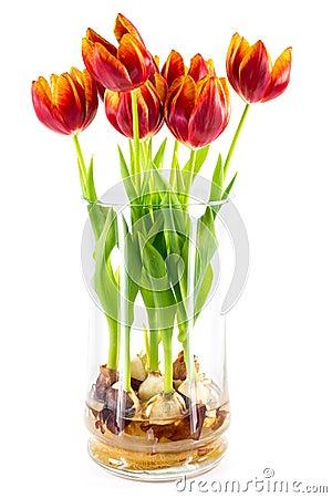 tulpen in een vaas van het glas stock foto afbeelding 29034290. Black Bedroom Furniture Sets. Home Design Ideas