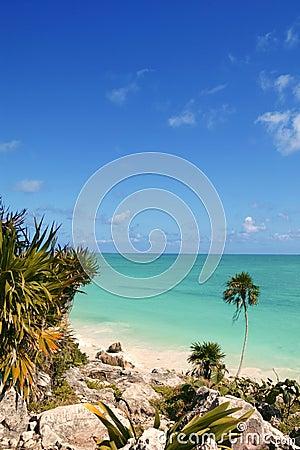 Tulum mayan riviera tropical beach palm trees