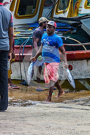 Free Tuna Fish Bringing To Land From Boats In Mirissa Harbour, Sri Lanka Stock Photography - 103870012