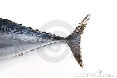 Tuna fish tail