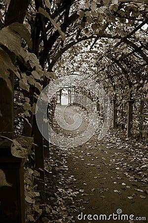 Tunnel of sorrow