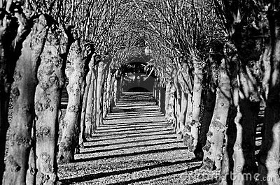 Tunnel of trees in black and white