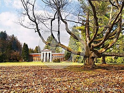Turcianska Stiavnicka - Massive tree and Arboretum