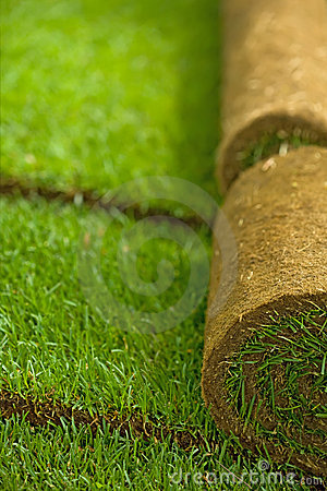 Free Turf Grass Rolls Royalty Free Stock Photo - 14523515