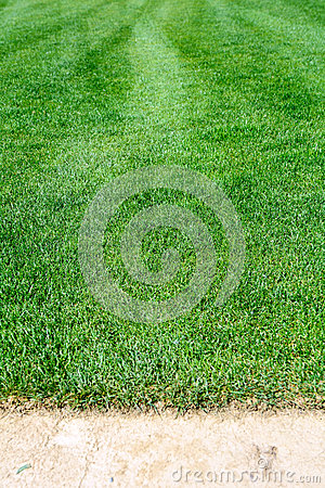 Turf for rolls