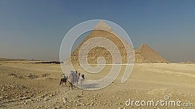Turistas que montam camelos em pirâmides de Giza video estoque