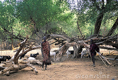 Turkana shepherds Editorial Stock Photo