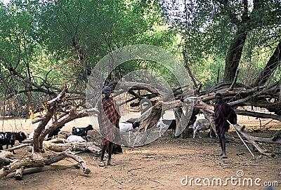 Turkana shepherds Editorial Stock Photo