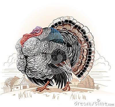 Free Turkey Royalty Free Stock Photography - 34040277